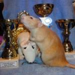 Absolutní vítěz výstavy - Yagmur z Mouseville