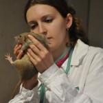 veterinární přejímka
