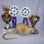 Absolutní vítěz výstavy
