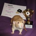 Nejlepší potkan variety dumbo