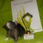 Nejlepší dospělá samice - Zornitsa z Mouseville