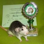 Nejlepší mladý potkan s kresbou Josslyn z Mouseville