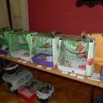 Výstava Mouseum