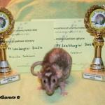 Nejlepší potkan sphynx a Nejmazlivější potkan výstavy PV Lamborghini Diablo