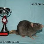 Nejlepší dospělý samec - Alfréd Iletis