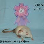 Nejlepší potkan variety dumbo - Křišťál von Percy