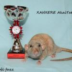 Nejlepší potkan fuzz - Xanxere AkaiTatsu