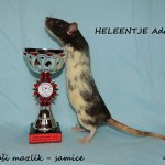 Nejlepší mazlík samice - Heleentje Adarats