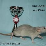 Nejlepší mladá samice - Murioche von Percy