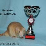 Nejlepší mladý samec - Rattonia Tighearnach